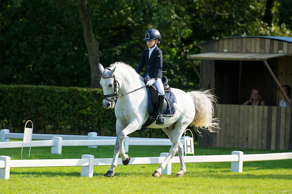 Dressage pony Onyx for sale (sold)