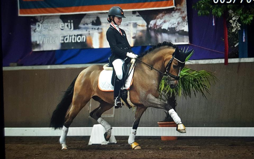 Micky becomes reserve champion of Brabant with Mithril
