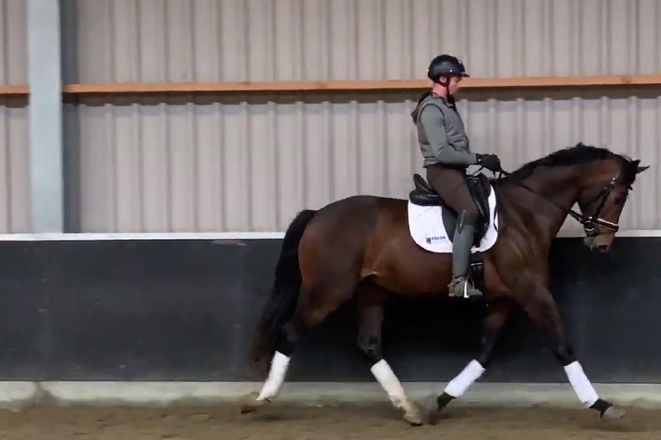 SD – Horse Lumax Sold in the U.S.